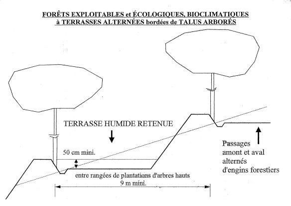 Gestion idéale des sols des forêts en pente, pour une productivité optumale